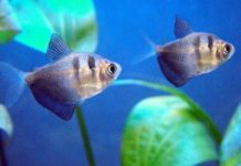 How to Set up an African Cichlid Aquarium | The Aquarium Club