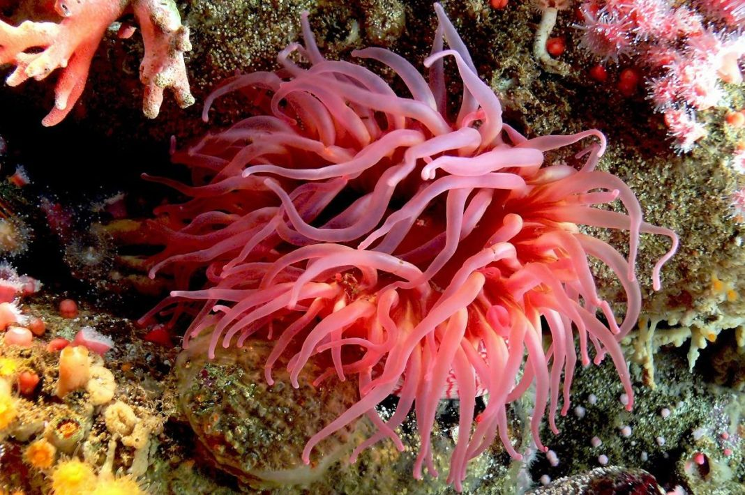 17 Facts You Need To Know About Sea Anemones Before You Add Them