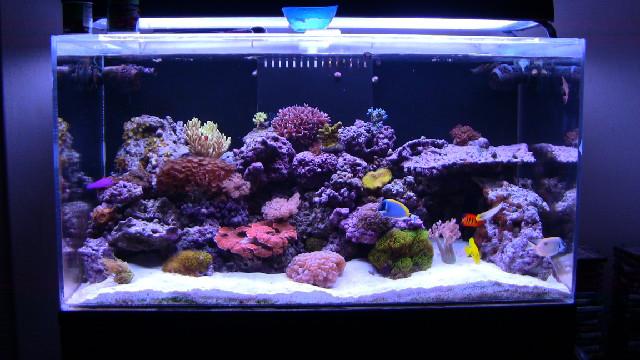 Maintenance of Salt Water Tanks | The Aquarium Club