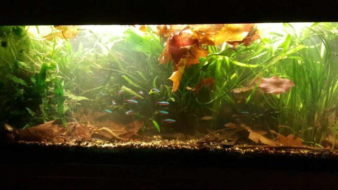 Why Are My Aquarium Plants Dying The Aquarium Club