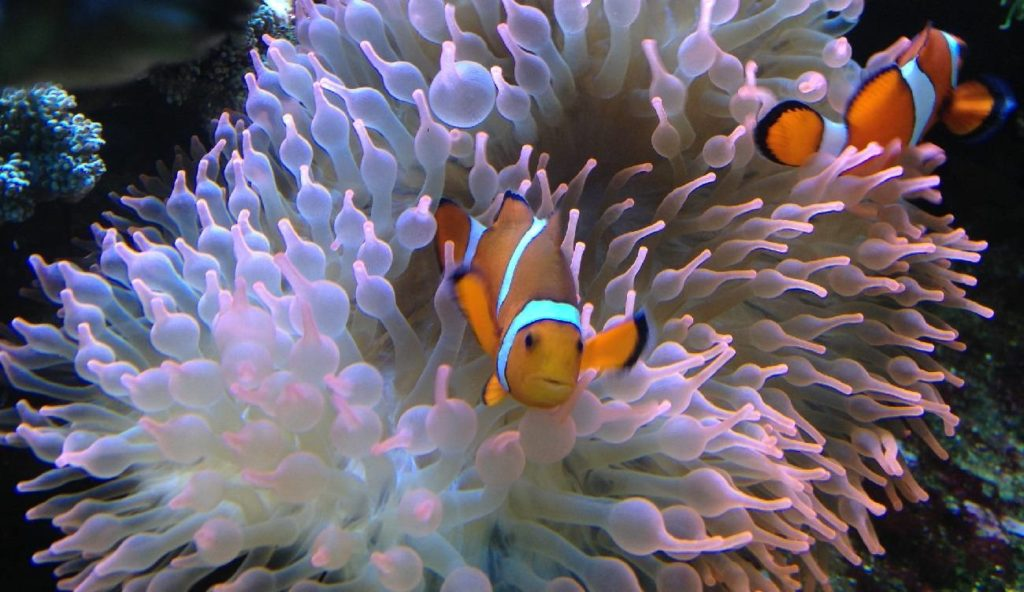17 Facts You Need To Know About Sea Anemones Before You