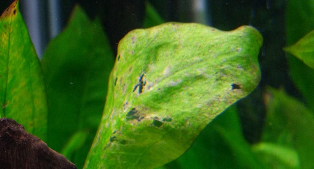 Aquarium Plants Deficiencies Chart | The Aquarium Club