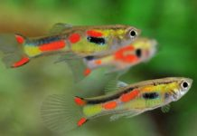 Green Water in Fish Tank: Why is Your Aquarium Water Turning Green