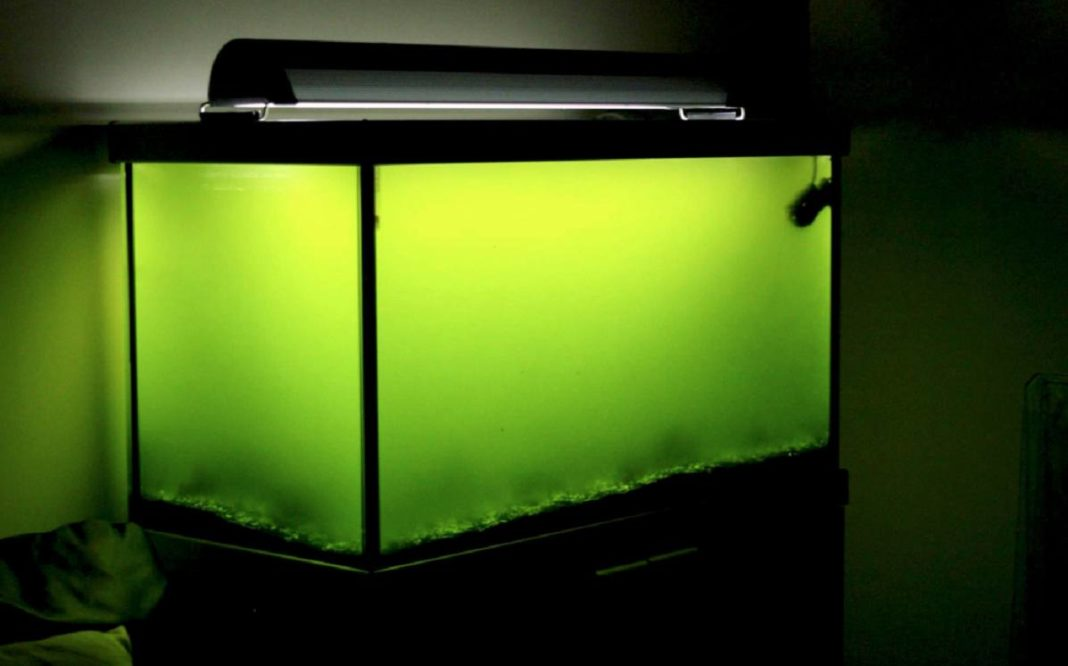 green water in fish tank why is your aquarium water turning green
