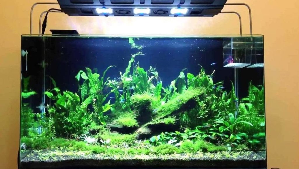 Why are My Aquarium Plants Dying? | The Aquarium Club