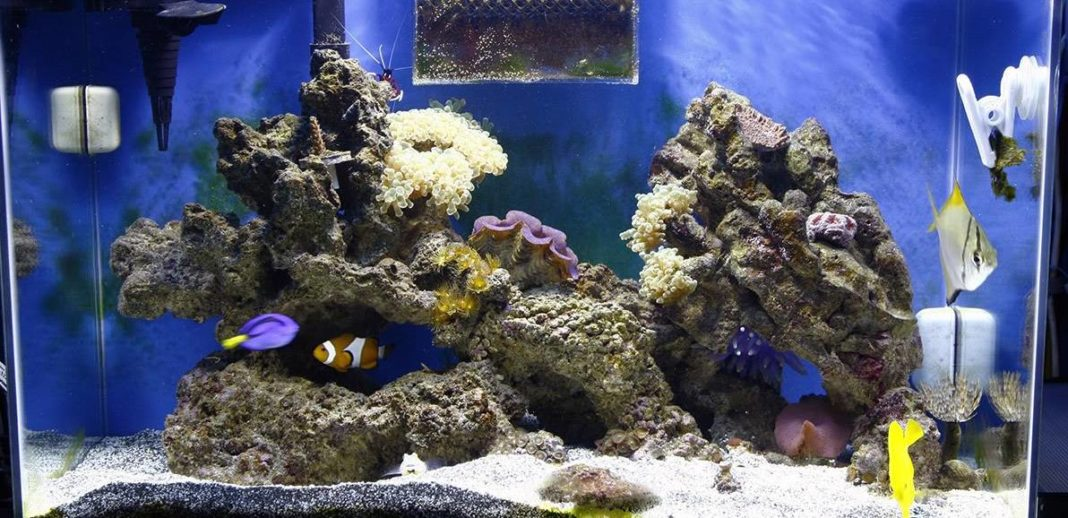 Why My Inverts Keep Dying? A guide to healthy Corals ...
