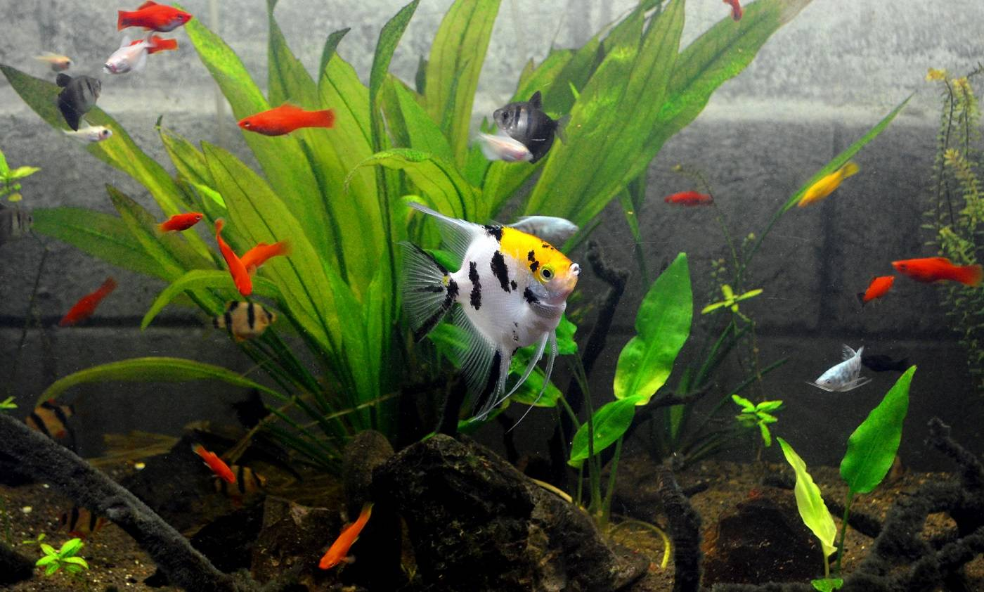 Fish Selection: What\'s best for me? | The Aquarium Club