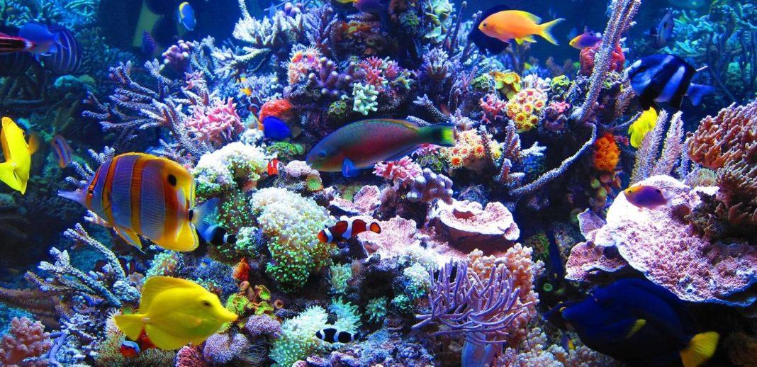 fluidized bed filters the aquarium club