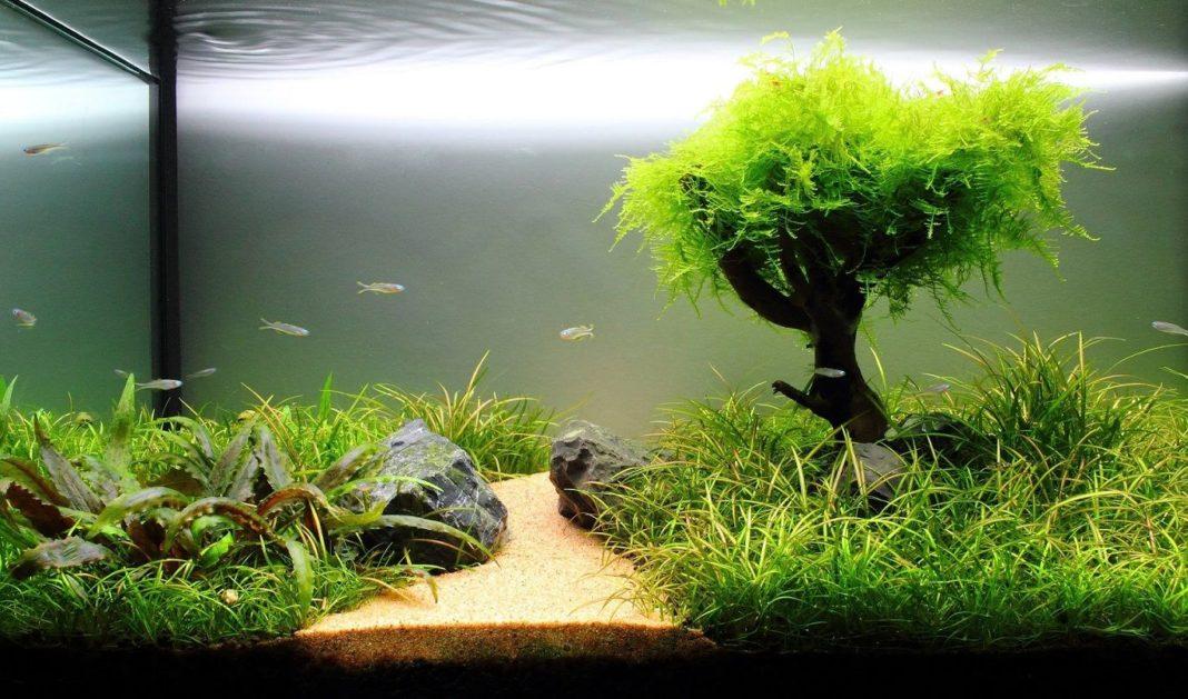 best lighting for freshwater aquarium plants the aquarium club